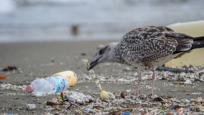 Plastic pollution on shoreline